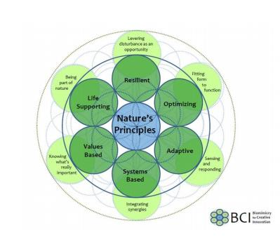 Biomimicry for creative Innovation