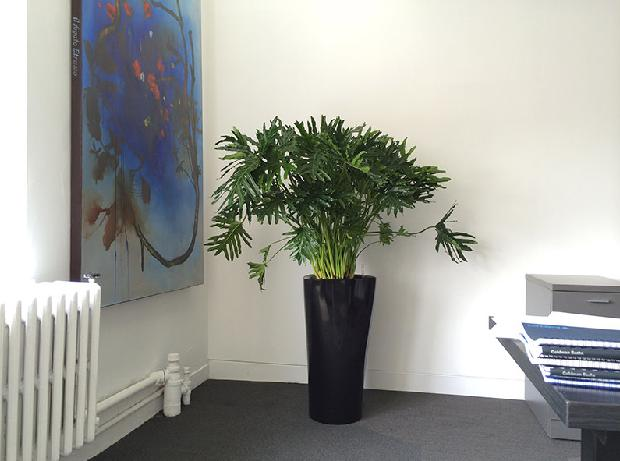 office indoor plants. Best Indoor Plants For Office A