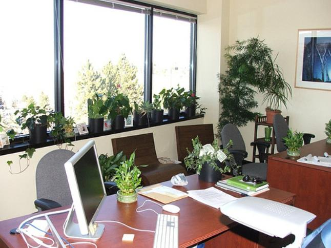 best indoor plants for office in india plants for office