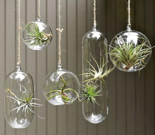 hanging planters glass