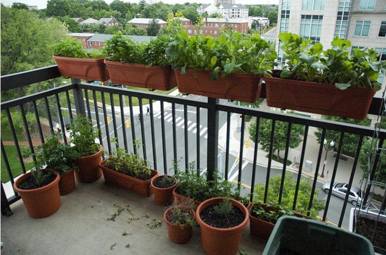 Terrace Garden Ideas Bangalore balcony gardening tips india, balcony gardening ideas for beginners