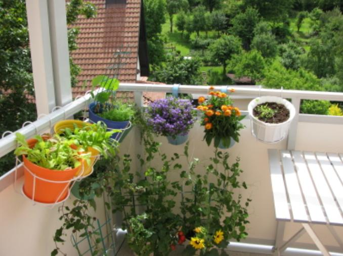 Balcony Gardening Tips India Balcony Gardening Ideas for Beginners