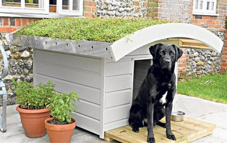 Indoor outdoor dog kennel plans good dog kennel design ideas for Indoor outdoor dog kennel design