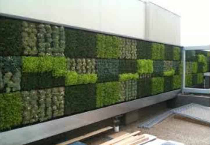 Living wall designs ideas green eco friendly walls india for Best house compound designs