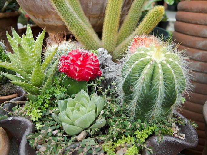 Low maintenance plants for office india common office for Low maintenance plants for office