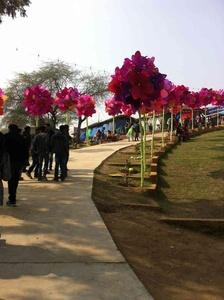 Large bougainvilleas line up the pathways