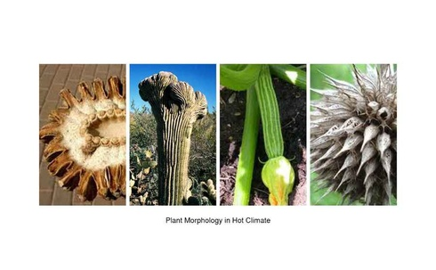 Plants Morphology in Hot Climate
