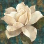Gardenia Blossom Turquoise Poster