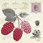 Raspberry Notes Poster