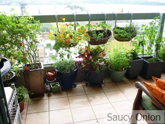 Balcony gardening tips india balcony gardening ideas for - Balcony garden designs india ...
